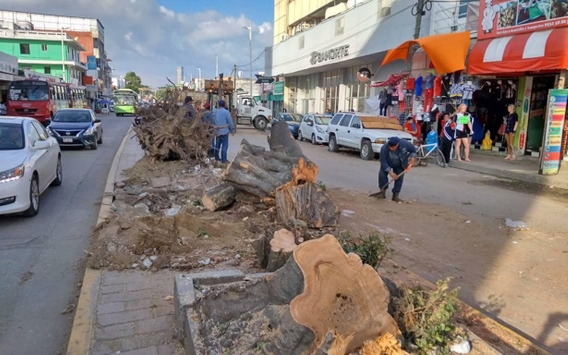 Será talados 139 árboles en Villahermosa - El Heraldo de Tabasco