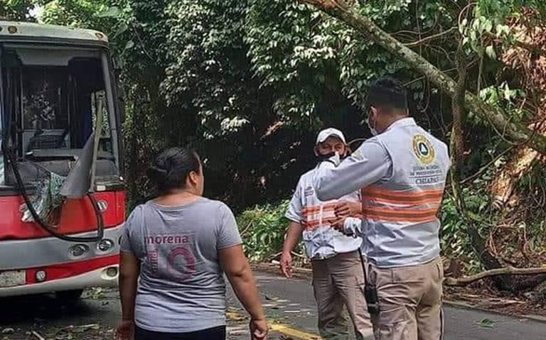Árbol le cae a un autobús provocando la muerte de un pasajero